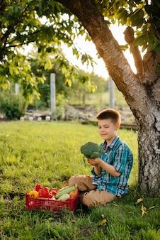 Маленький мальчик сидит под деревом в саду с целой коробкой спелых овощей на закате. сельское хозяйство, сбор урожая. экологически чистый продукт.