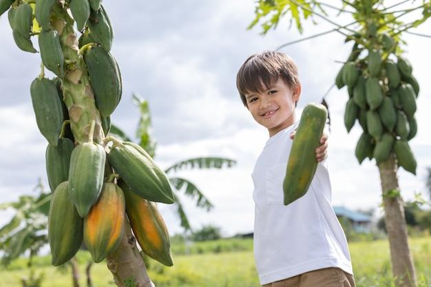 小さな男の子が裏庭でパパイヤを選びます。健康とウェルネス。