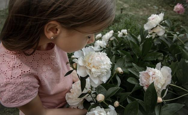Маленькая милая девочка нюхает куст белых пионов, распустившихся в саду.