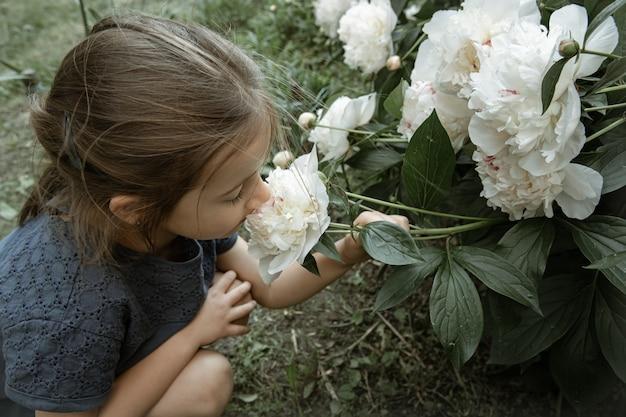 かわいい女の子が庭に咲く白い牡丹の花の茂みを嗅ぎます。