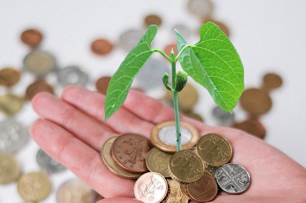 コインに小さな花とこのコインと植物を渡すことは、コインでお金の植物を節約することを意味します