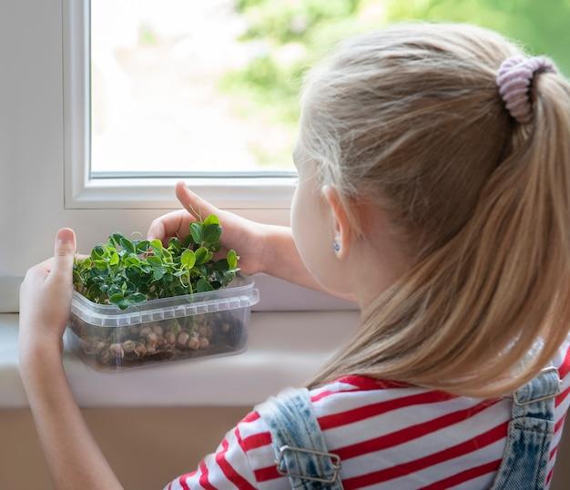 창가에 있는 어린 소녀가 완두콩이 자라는 모습을 지켜보고 있습니다.