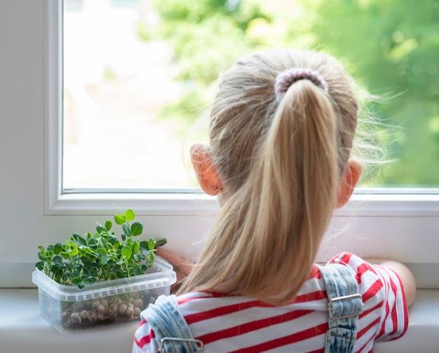 창가에 있는 어린 소녀가 초미량 완두콩이 자라는 모습을 지켜보고 있습니다.