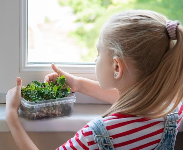 Маленькая девочка у окна наблюдает, как растет микрозеленый горошек