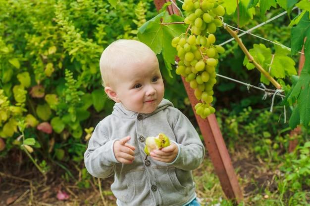 小さな女の子が梨を食べて、ブドウ園のブドウの茂みのそばに立っています