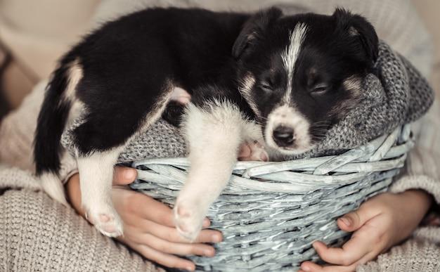 かごに子犬を抱いた少女