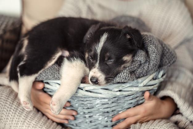 바구니에 강아지를 들고 어린 소녀.