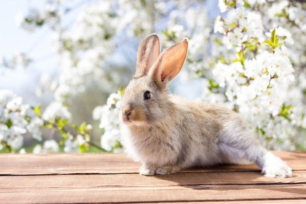 Маленький зайчик сидит на деревянном столе на фоне цветущего дерева. весенний заяц. пасхальный заяц