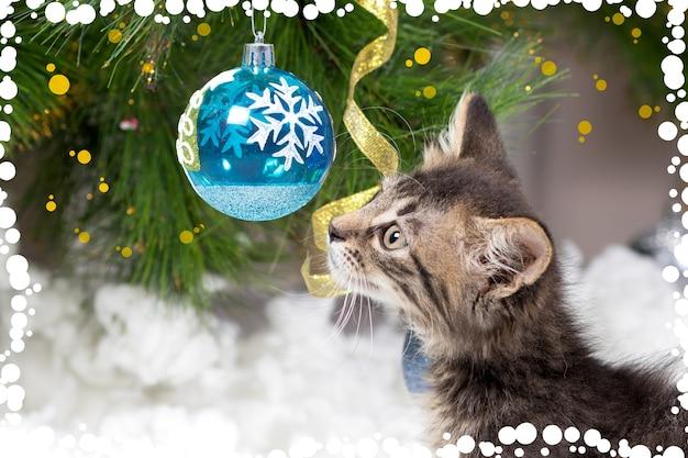 Маленький котенок и мяч на ветке елки.