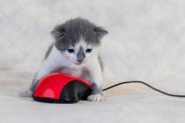 Маленький котенок играет с компьютерной мышкой. работа дома во время карантина