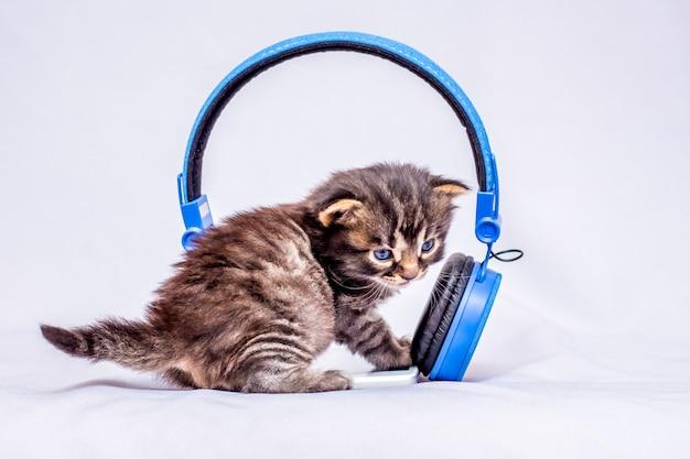 Маленький котенок слушает звуки музыки возле наушников. наушники для прослушивания любимой музыки