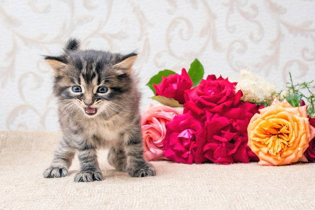 花の花束の近くの小さな子猫。休日おめでとうございます。誕生日のバラ_