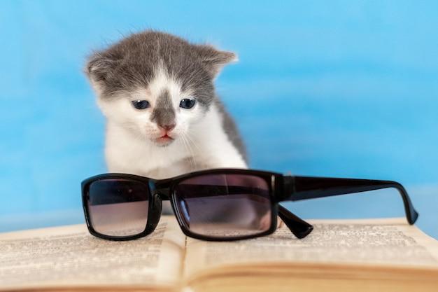 開いた本と眼鏡の近くの小さな子猫。本を読んでいる
