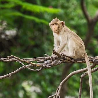 나뭇 가지에 앉아 작은 원숭이
