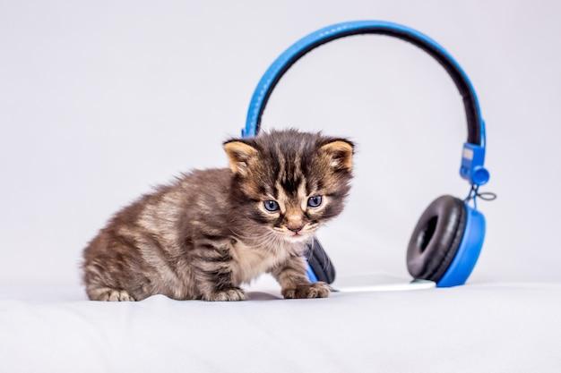 Маленький полосатый котенок возле наушников. реклама и продажа наушников