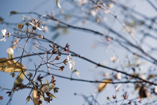 가지 흰둥이 매달려 작은 흰 꽃