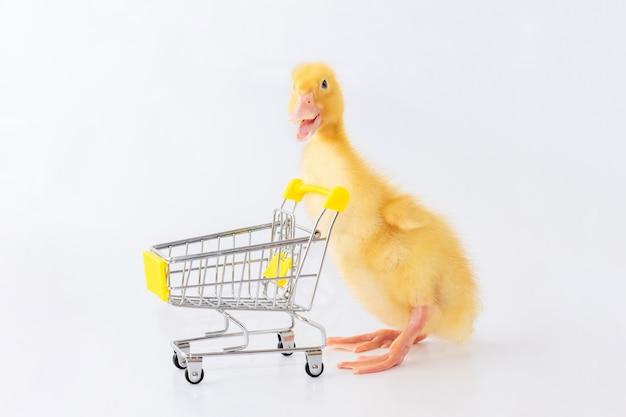 작은 노란색 오리가 쇼핑 카트를 운전하고 있습니다. 상점에서 쇼핑.