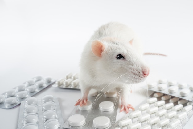 살아있는 흰색 실험실 실험용 마우스는 알약에 앉습니다. 동물에 대한 의료 조작, 백신 실험, 약물 테스트, 비타민 테스트.