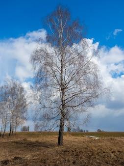 牧草地の春に葉のない孤独な白樺の木。背景に雲と明るい青空。縦の写真