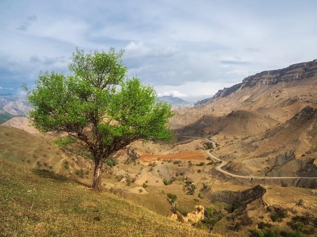 山腹にある孤独な緑の木。遠くに入る山道の曲がりくねった道。