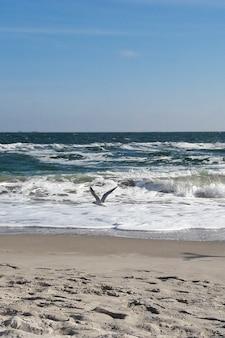 Одинокая чайка летит по берегу моря на фоне неба, пенистых волн и песка.
