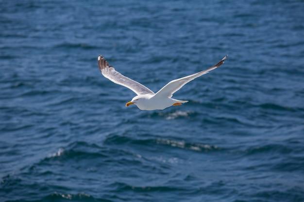 Одинокая чайка летит над морской водой, крупным планом