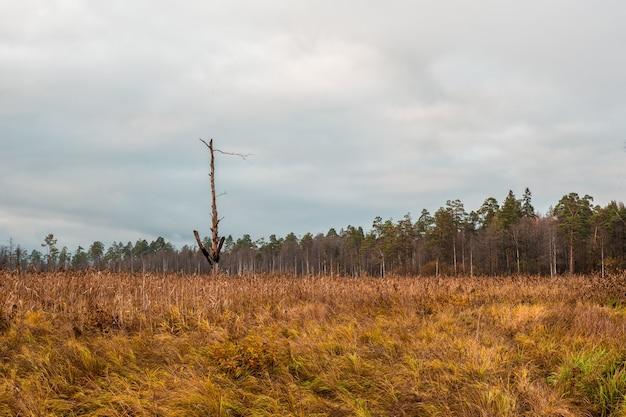沼地で稲妻が燃えた一本の木。秋に北の沼。