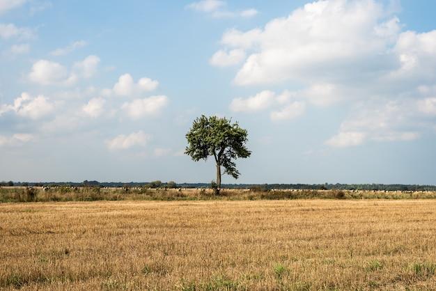Одинокое дерево стоит посреди поля