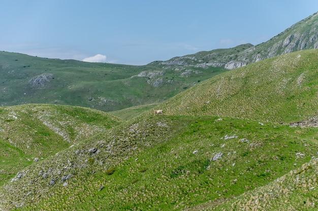 Одинокая корова наслаждается живописным горным пейзажем.
