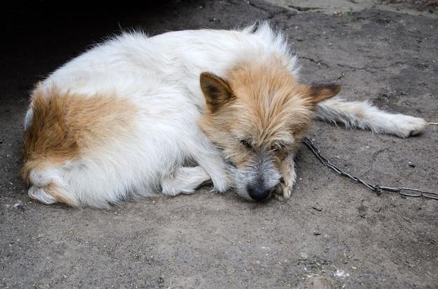 Одинокая собака спит и привязана к цепи собака спасена от плохих условий жизни и является символом прав животных.