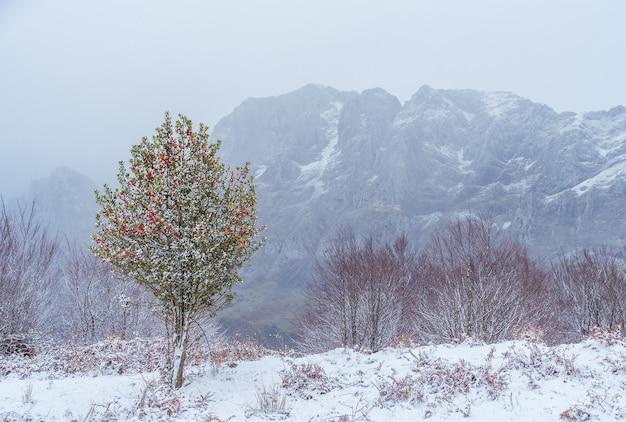 ウルキオラ自然公園の雪の中で孤独な聖なる木
