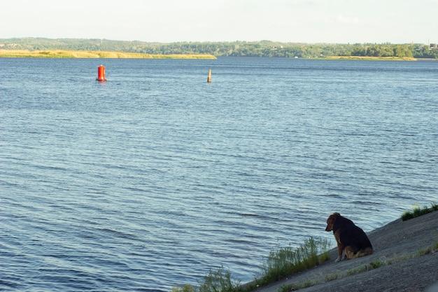 Одинокая дворняга ждет хозяина и смотрит в воду. концепция - одиночество, преданность делу, надежда на лучшее будущее или воспоминания о прошлом.