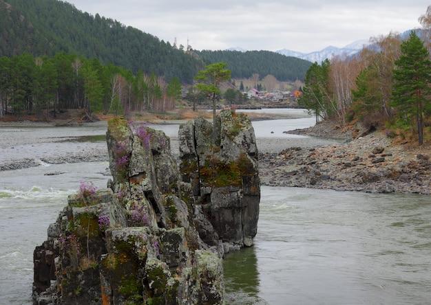 Одинокая сосна на вершине высокой крутой скалы посреди горной реки