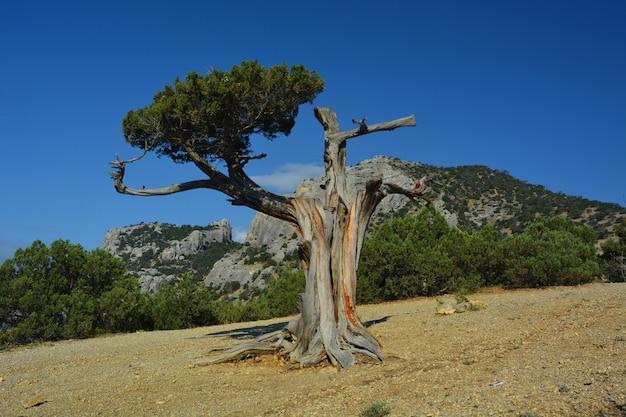 山の中の孤独な木