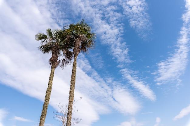 외로운 나무는 푸른 하늘과 흰 구름 아래 있어야합니다