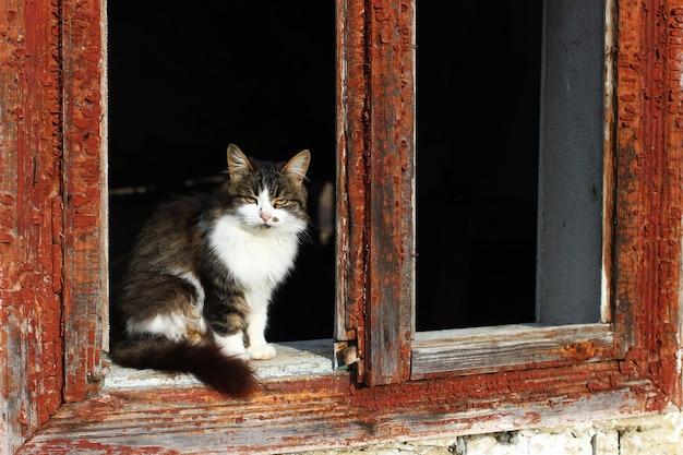 창가에 앉아있는 외로운 불행한 고양이