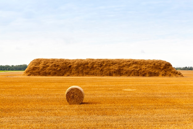 収穫後、畑に横たわる藁と小さな俵の長い巨大なスタック
