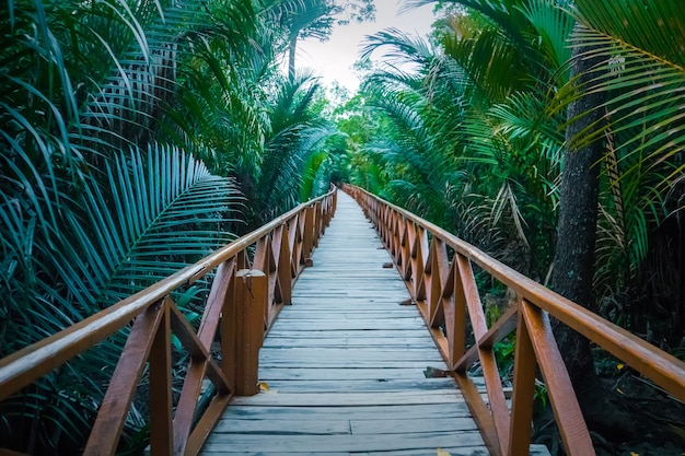 手すりのある長い木製の橋が、ジャングルの下草を通り抜けています。端に沿って葉の長い緑のヤシの枝があります。透視図