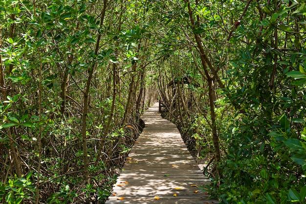 Длинная деревянная тропа в мангровых лесах