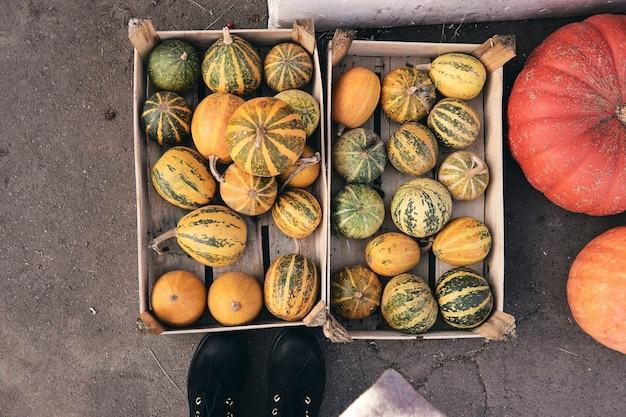 Много декоративных тыкв на фермерском рынке. праздничный сезон благодарения и декор хэллоуина. осенние комбайны, осенняя природа. вид сверху ботинка, потерять ноги в джинсах и обуви.