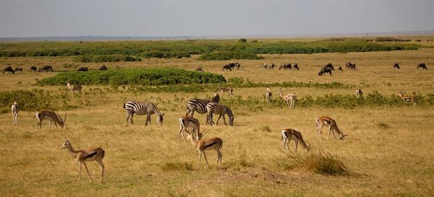 ケニアのサバンナにいるたくさんの動物