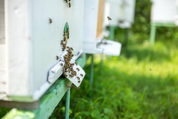 たくさんのミツバチが巣箱の周りを飛んでいます。ミツバチはユリで飛ぶ。