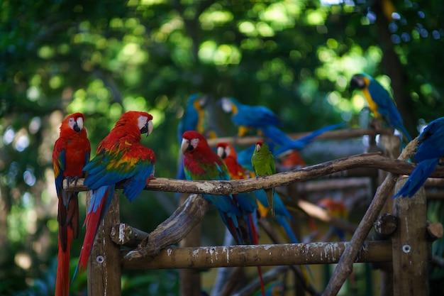 На ветке сидит много сине-желтых ара и красных аров.
