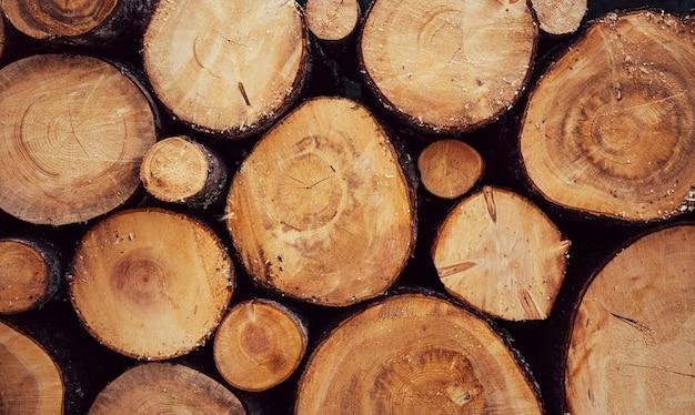 잘린 통나무가 많습니다. 넓은 배너 또는 파노라마 나무 줄기. 자연 속에서 나무의 통나무의 근접 촬영