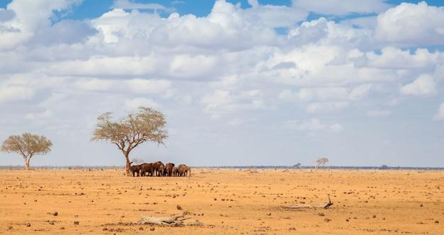 ケニアのサファリで大きな木の下に立つたくさんの象
