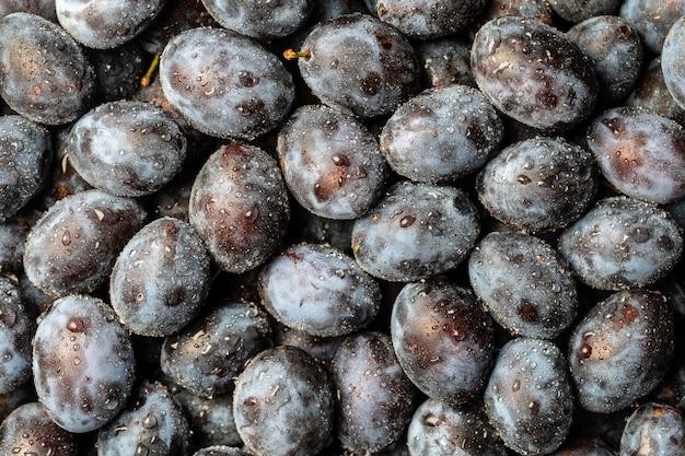 Много свежих плодов голубой сливы с каплями воды. предпосылка текстуры свежих синих влажных слив. крупным планом, вид сверху
