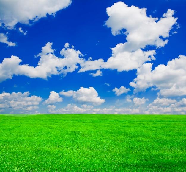 青い空の下にたくさんの緑の小麦