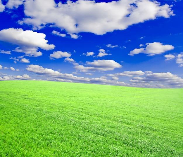 黄色い空の下にたくさんの緑の麦