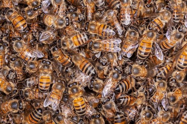 ハイブにたくさんのミツバチapismellifera