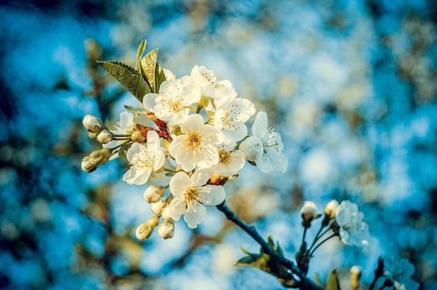 黄色い雄しべと緑の葉を持つ小さな白い花がたくさん